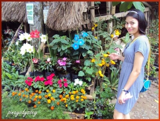 Beautiful plants on sale