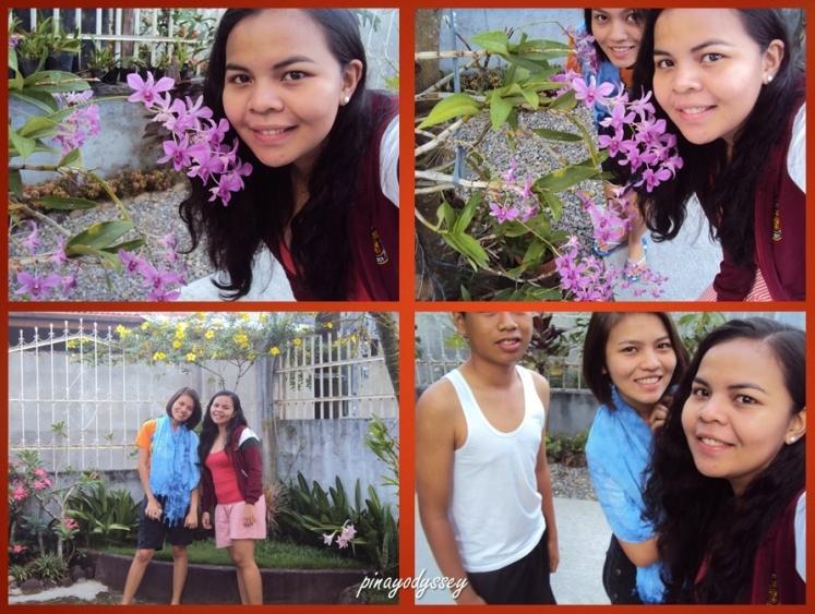 Beautiful flowering plants in the garden