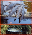 CROCODILE FARM AND NATURE PARK - PHILIPPINES