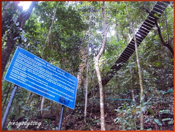 A hanging bridge
