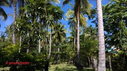 San Narciso, Quezon Province