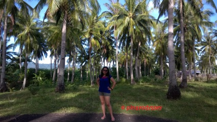 Amidst the towering cocos!