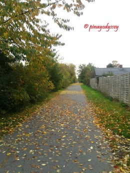 The road to the supermarket in autumn