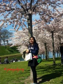 CPH Sakura Festival