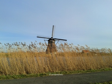 Tall grasses try to hide a windmill