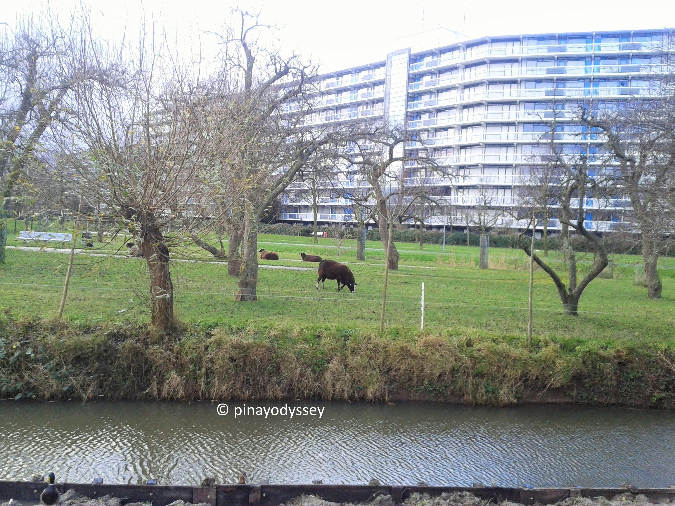 The enduring Dutch town of Spijkenisse – PinayOdyssey
