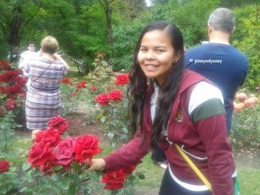 Big, big roses!
