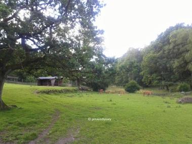 Skåne Djurpark