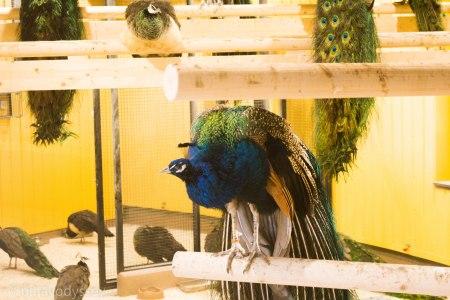 A colorful bird