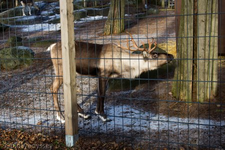Helsinki zoo