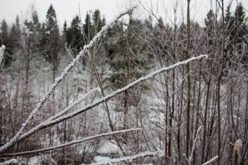 Winter photo walk