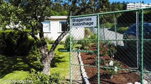 Bragernes kolonihage