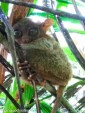 PHILIPPINE TARSIER AND WILDLIFE SANCTUARY - PHILIPPINES