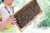 BOHOL BEE FARM - PHILIPPINES